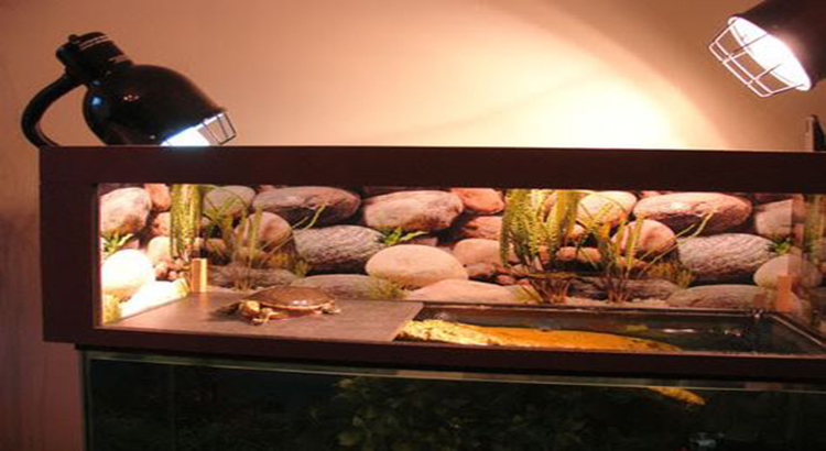 Guide For Lighting And Heating A Turtle Tank And Basking Area