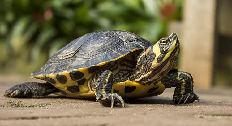 How Much do Turtles Cost ( With 20 Examples ) | Turtle Owner