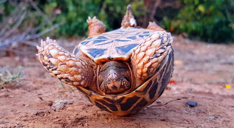 Image result for upside down turtle